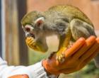 济南野生动物世界2021年春节黄金周共接待游客7.5万人次