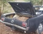 神秘的1965年福特野马生活在树林中现为柏油碎石准备