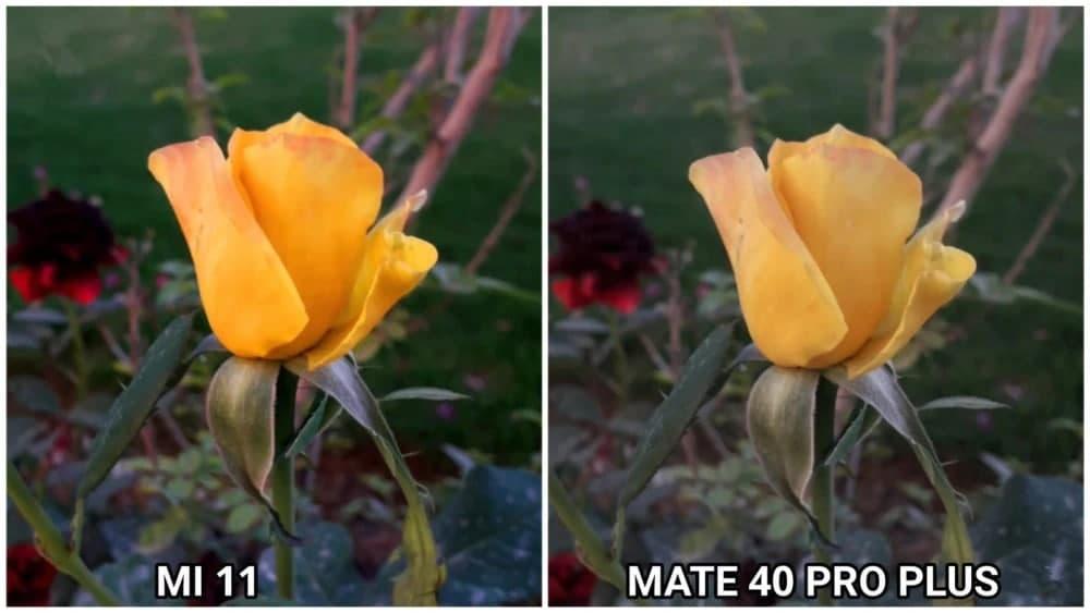 小米11和华为Mate40Pro+拍照对比 哪个拍照更好呢
